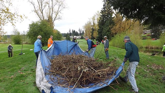 Volunteers cleaning up tree waste on tarp.